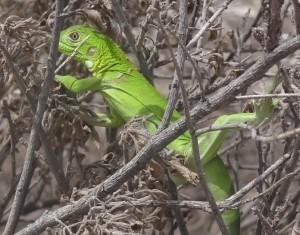 greenish 018